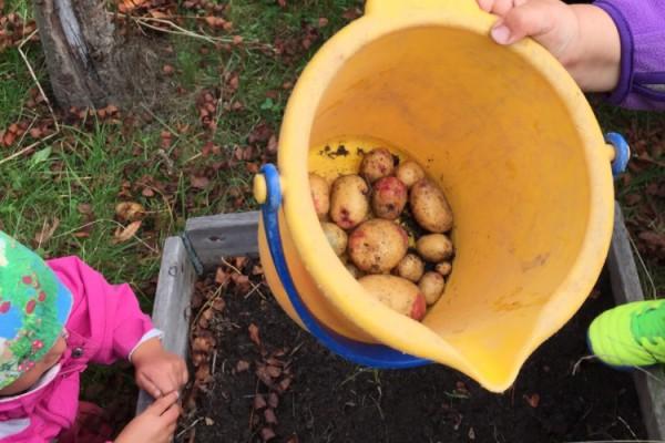 Potatisprovet